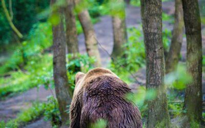 Zie jij beren op de weg?